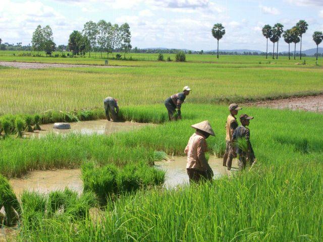Viaje a Camboya de Carmen, Stefan, María y Olaya