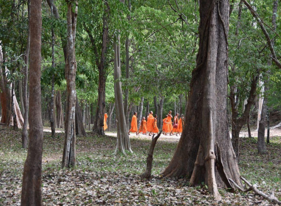 un viaje a una Camboya Increíble, Bosques.