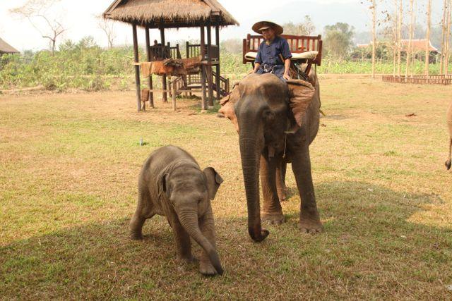 Fortos de Laos