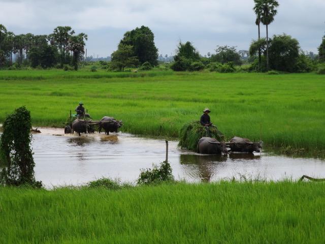 vicky en Camboya