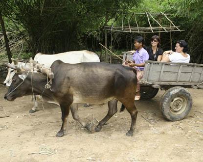 Viajar a Camboya en diferentes estilos