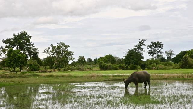Camboya que ver en tu viaje