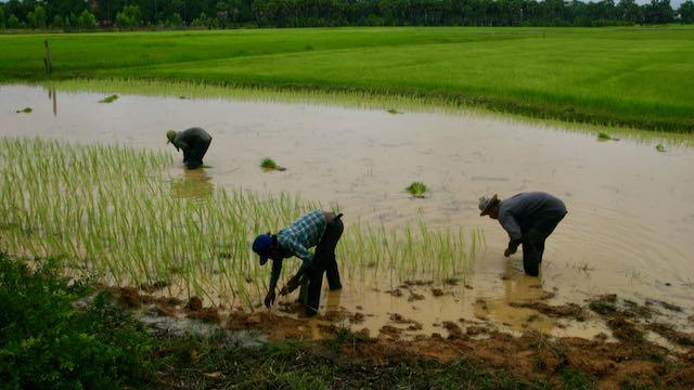 Agricultores en epoca de lluvias