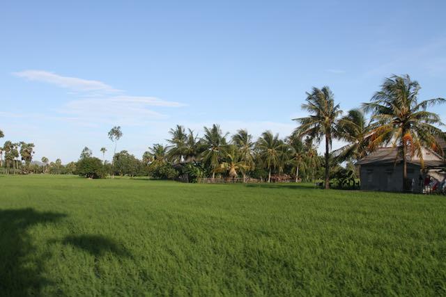 Campo de arroz Camboya